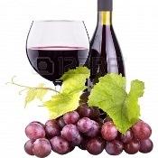 Nordeste no circuito de produção de suco de uva de qualidade