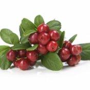Cranberry: benefícios e como consumir