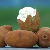 Benefícios do cupuaçu para a saúde