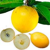 Fruta Abiu: Para que serve?