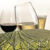 Envase Experience: falando de vinho e suco