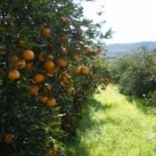 As frutas mais saborosas e fáceis de encontrar no mês de abril