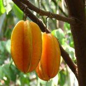 As frutas ideais para o mês de junho