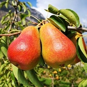 Frutas de maio