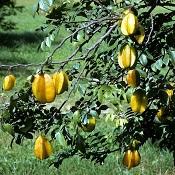 Julho é época de que frutas no Brasil?